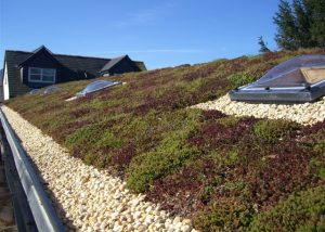 Green Roofing in Peterborough